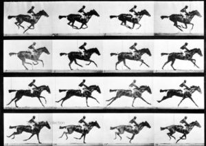 101 - E. Muybridge, Study of a horse